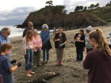 Dr. Dawn Golay preparing for stranding report protocols-Juvenile Stellar Sea Lion, female