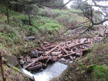Driftwood logs at Cape Creek