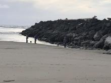 South jetty explorations at low minus-tide