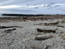 Piles of logs cover the high beach south of the jetty