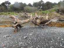 bank erosion