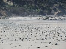 Sand filling in rocky beach.