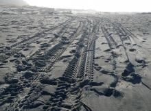 Tire tracks on Taft beach