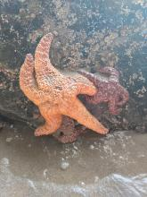 Dancing with the Sea Stars