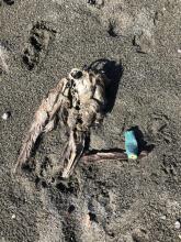 dead bird number 2