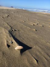 wind makes play of drift line debris