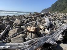 Boulders and driftwood, Neahkahnie