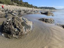 Beachcombers and tidepools, Neahkahnie