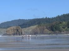 Chapman Point at Low Tide