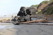 Giant Stump.