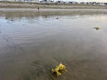Buried marine debris?