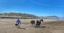 Horses on the beach near Gleneden Beach