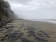 Looking south / Mile 310 / Arcadia Beach