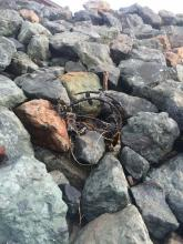 Crab pot deposited by King Tide