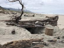 """Driftwood """"Fort"""", Nedonna Beach"""