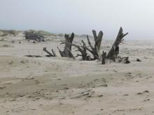 Landmark driftwood 9-26-2020