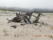 Landmark driftwood with new driftwood placed atop
