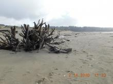 2/14/2020 photo of landmark driftwood looking south to plover habitat