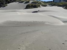 There are low dunes all along mile 99 right now
