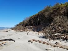 Magruder Shoreline