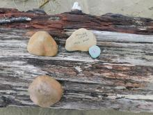 Memorial stones on driftwood log