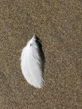 Feather with insect