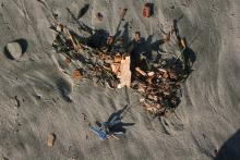 Wood chips on beach.