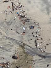Example of plastics in debris line all along beach