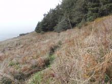 new trail_south of quarry_mile 227_04Nov19
