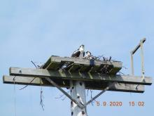 Ospreys atop nest platform, closeup