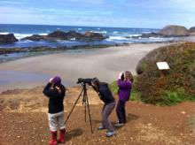 Audubon volunteers/ Black Oyster Catcher survey