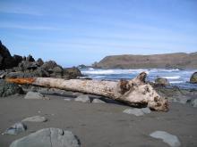 Log thrown up on Lone Ranch Picnic Access Beach