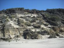 Sand and vegetation erosion above shallow bluffs.