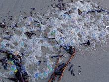 wind blew in sea foam.  Bubbles captured light dispersion.