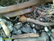 One dead Cormorant, along with crab pot and guard rail bumper.