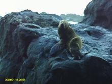 I didn't notice this sea lion pup until it noticed me first, so I took its picture and didn't seem to cause it any alarm.