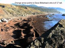 This picture has an orange arrow where Dave is in the duff piles at Crook Point.