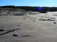 Last year New River was flowing to the south here and eroding this area.  But now it is filled with sand.