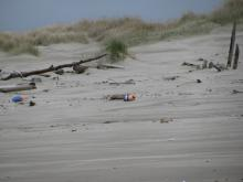 The dune area contains most of the debris, both human and natural.  Floats and wood appear here.