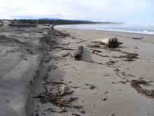 This is new erosion that has occured along the sand bank that is the northern border of New River.
