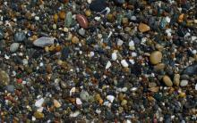 Another picture of pea gravel at south end of Merchants Beach. The largest of these stones are about an inch long, most are about 1/4 inch.