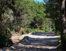 This is a typical view of the primary access to the south end of Mile 135, the Hauser Sand Road. It leads over the dunes and through incredibly dense shore pines, salal, and willows.