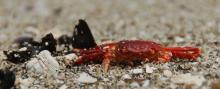 All that remains. One small crab that didn't quite make it. (Cape Arago, Middle Cove)