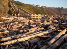 Heavy driftwood buildup at the base of the Coquille Point stairs at 11th Street.