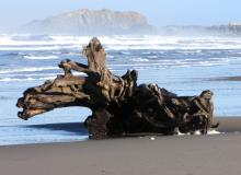 This beautiful piece of driftwood has been uncovered again by the sea.  It was here last fall and winter.
