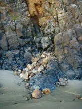 Small rockfall in cove at Chapman Point.