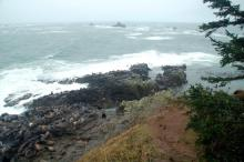 Shows the headland of the North Cove with Simpson's Reef in the background. Lots of sea lions on the headland rocks.