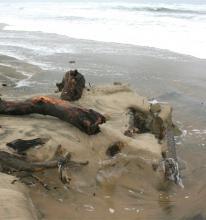 Beach scouring - erosion