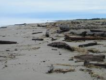 Photo taken about 1/3 mile south of the north border, looking north.  This is the first time we have seen this much driftwood in this area.