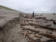 Driftwood and dune of mile 333